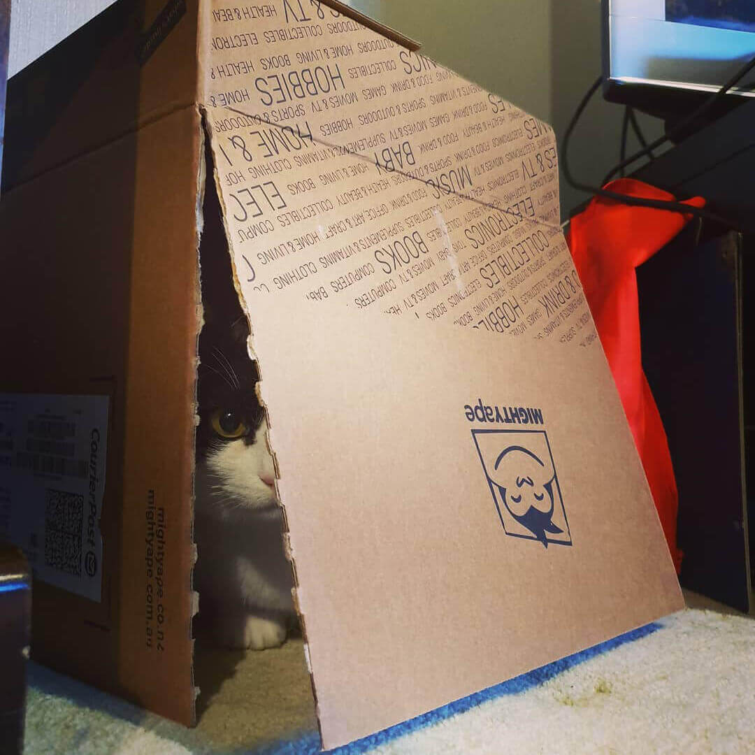 Cat playing in a Mighty Ape box